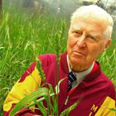Borlaug_wheat31